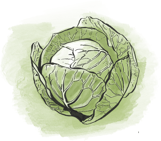 Cabbage from Riverbend Gardens, Edmonton Alberta