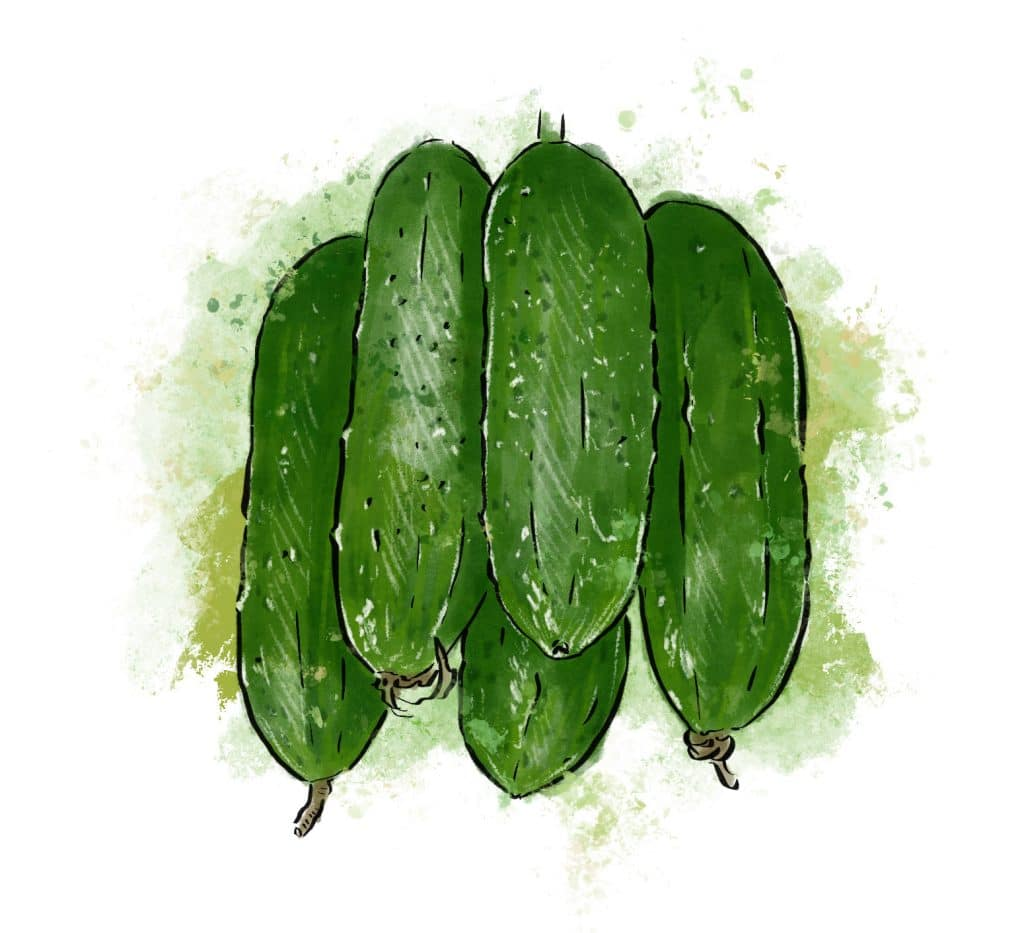 Cucumbers from Riverbend Gardens, Edmonton Alberta
