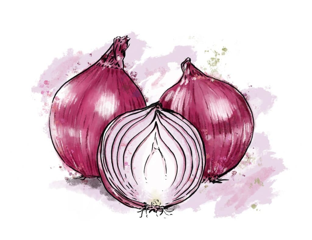 Onions from Riverbend Gardens, Edmonton Alberta